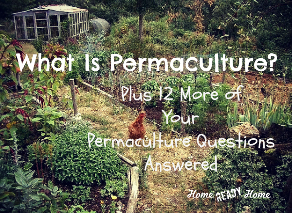 What is Permaculture? Plus 12 More of Your Permaculture Questions Answered