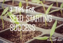 7 Tips for Seed Starting Success